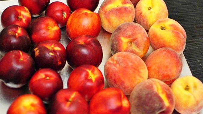 Что полезнее нектарин или персик